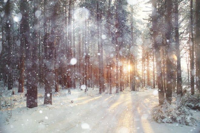 Background winter forest.