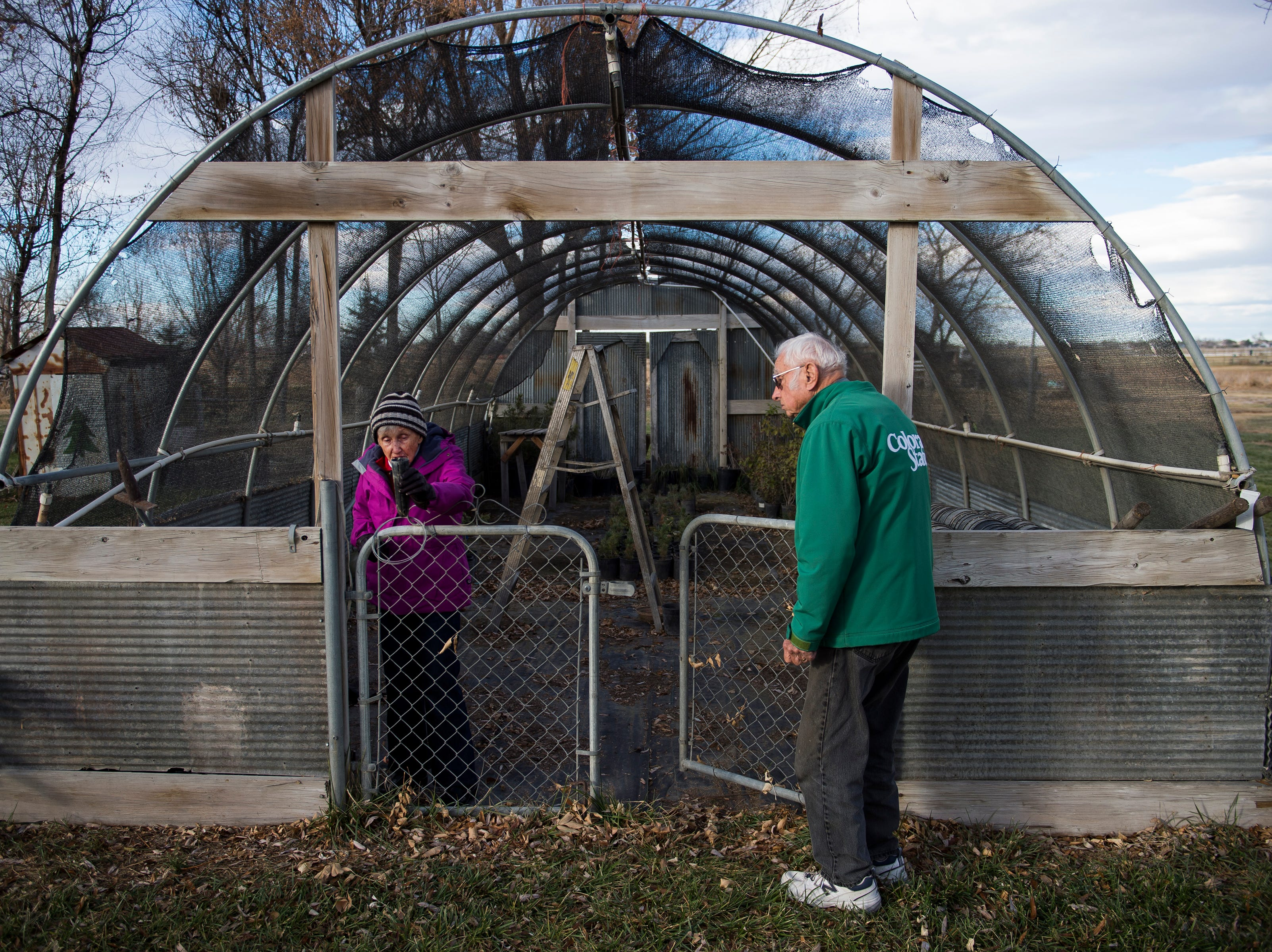 Janice Windsor shows the tubes that there saying trees come in before being planted in the shade house while husband John looks on, as seen on Friday, Nov. 16, 2018, at Windsors'  Christmas Trees in Windsor, Colo.