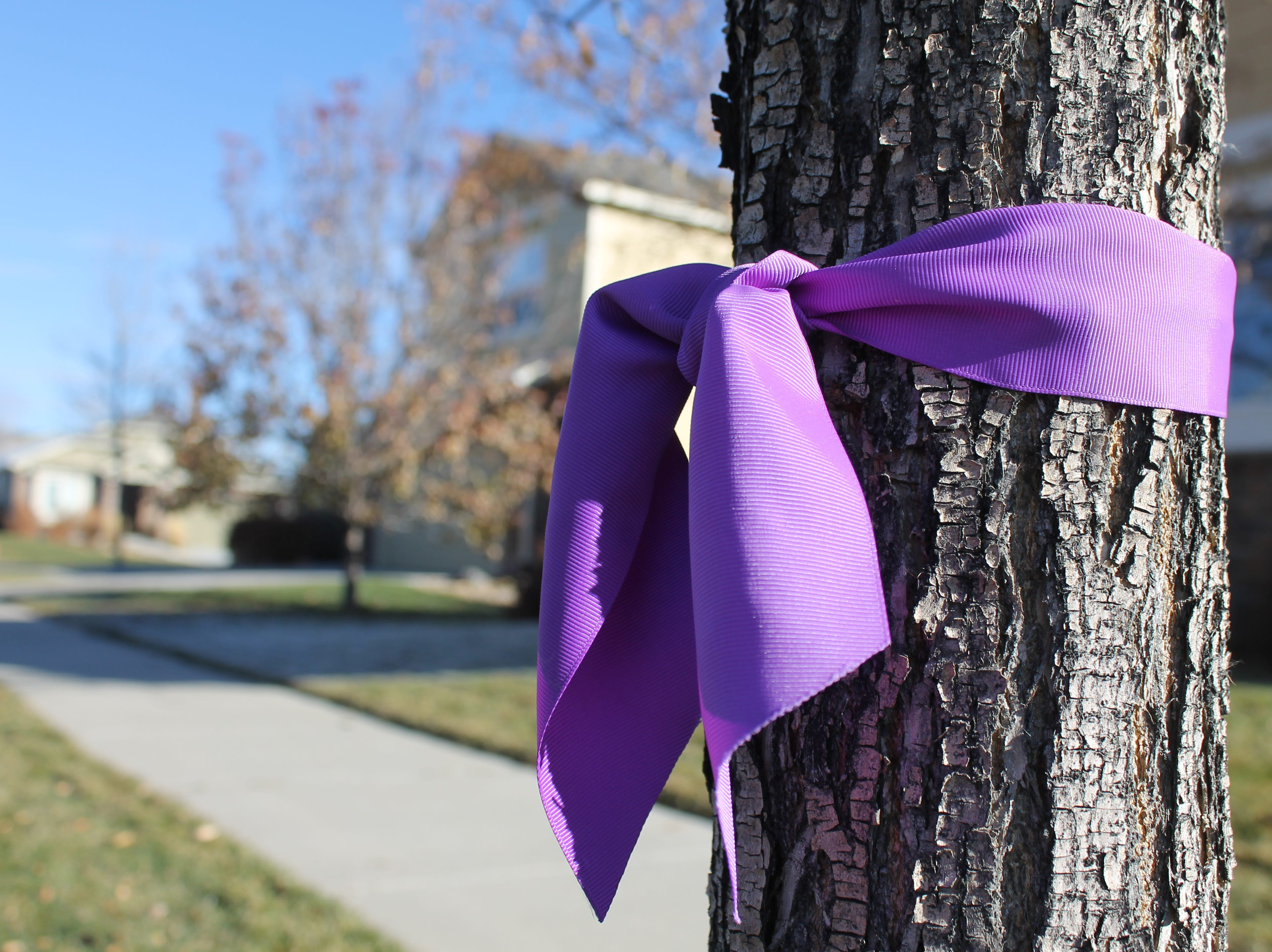A purple ribbon hung on a tree Monday in the neighborhood where Shanann Watts and her two young daughters Bella and Celeste lived. Angela Wilson, the Town of Frederick's event coordinator, helped distribute the ribbons in September. Some ribbons still stand, honoring the family.