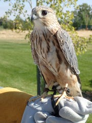 Monte The Merlin At Montana Wild In Helena