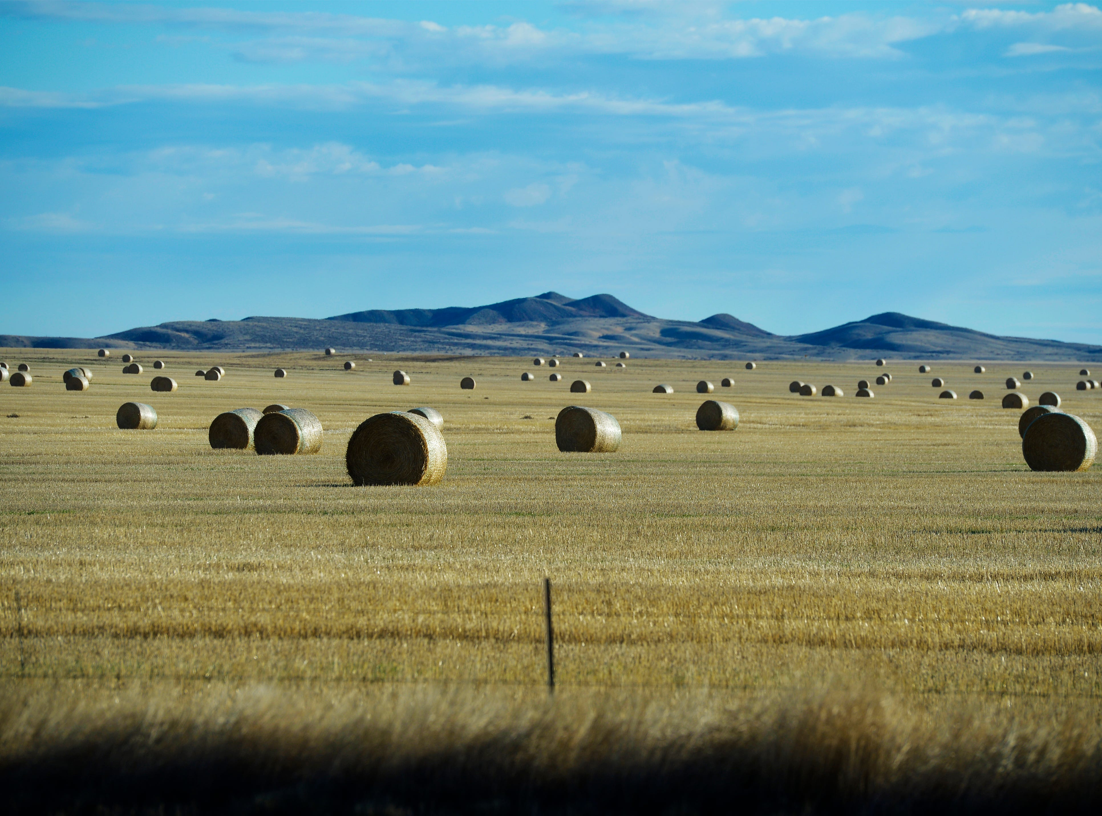 Hay bales dot the landscape in Valley County.