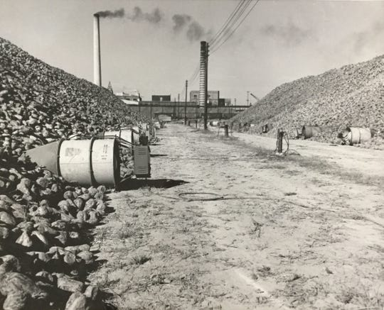 Air ducts pump air through the beet piles to prevent rotting, in  Saginaw, 1958.