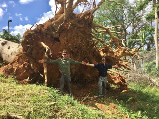Brian Galligan, vice president of horticulture at the Naples Botanical Garden, and Chad Washburn, vice president of conservation at the Garden, stand on Jan. 18, 2018, next to the roots of a tree that fell during Hurricane Maria last year at the Arboretum Doña Inés Park in San Juan, Puerto Rico.