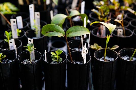 SECONDARY_Ndn 1123 Puerto Plants