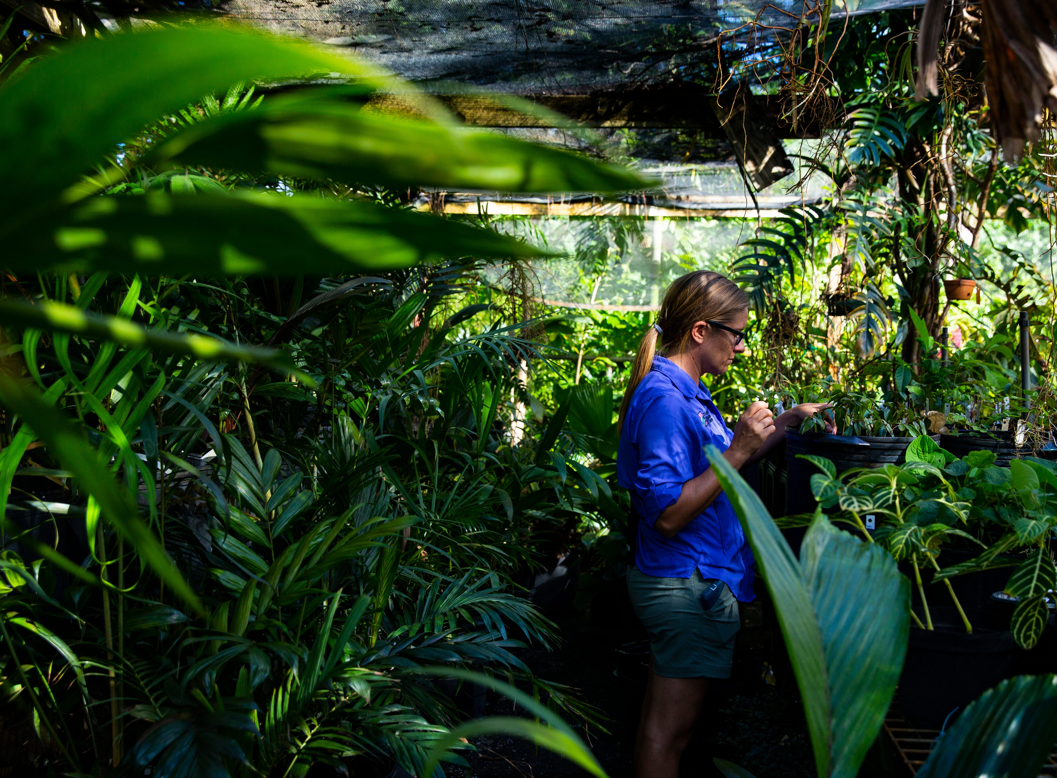 Naples Botanical Garden nursery manager, Andrea Grace, takes care of several seedlings and plants that were transported from Puerto Rico to Naples Botanical Garden during Hurricane Maria. Nearly 86 seedlings were transported from Puerto Rico to Naples during Maria. Nov. 15, 2018.