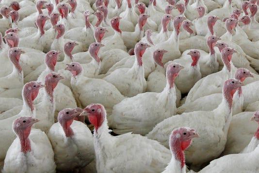 Turkey Salmonella Q And A