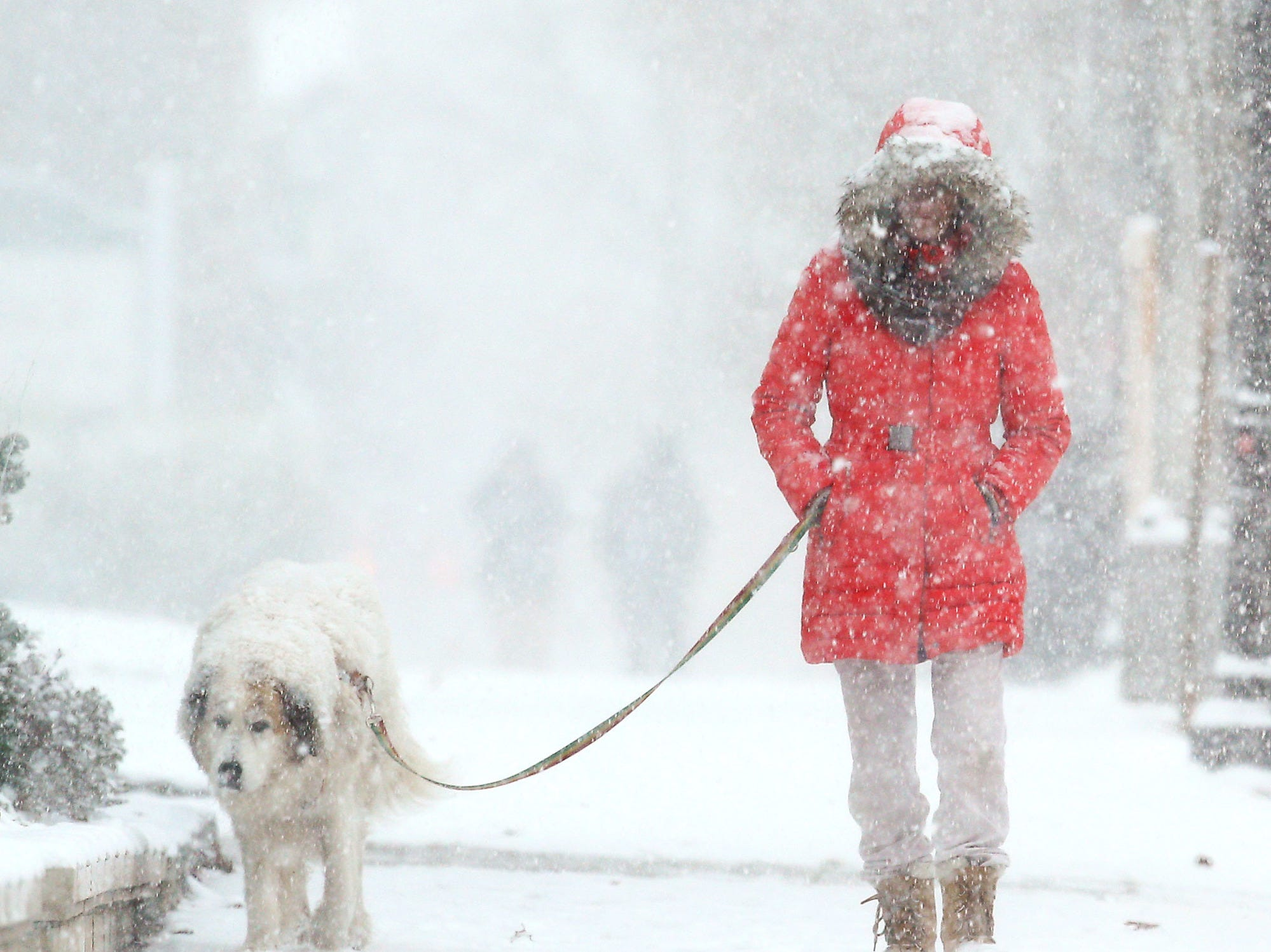 Amy Johnson and Stormy of Morristown walk down South Street  as snow becomes heavier, pedestrians navigating a predicted nor'easter, scheduled to dump over half a foot of snow and freezing rain on the area.  November 15, 2018, Morristown, NJ