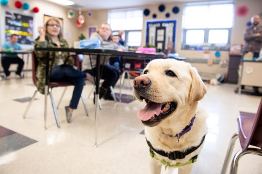 Murray, one of seven service dogs throughout Northern York School District, stands in his classroom at the jhigh school. 'It has made a huge difference,' said Northern High School principal Steve Lehman. 'So I think that's where I would say it's been money well spent within the district. ... It does add to the overall environment, having dogs part of what we do.'