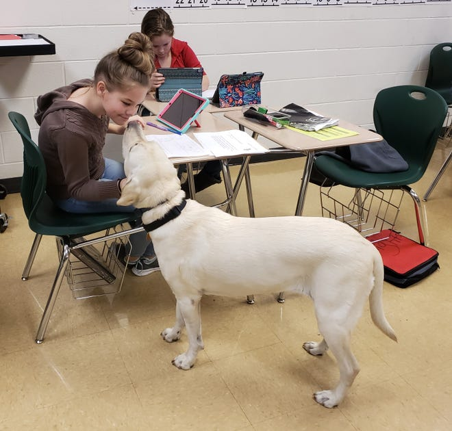 Grace the therapy dog roams the classroom and helps put smiles on the faces of students and staff at Northeastern Middle School.