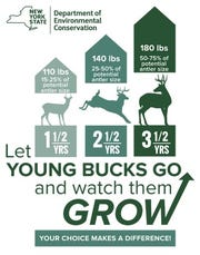 DEC campaign graphic to reduce the harvest of young bucks.