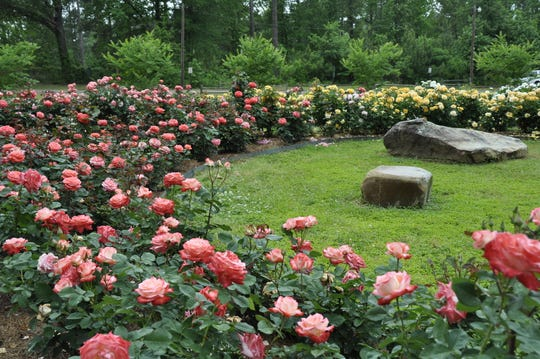 Roses at Gardens of the American Rose Center