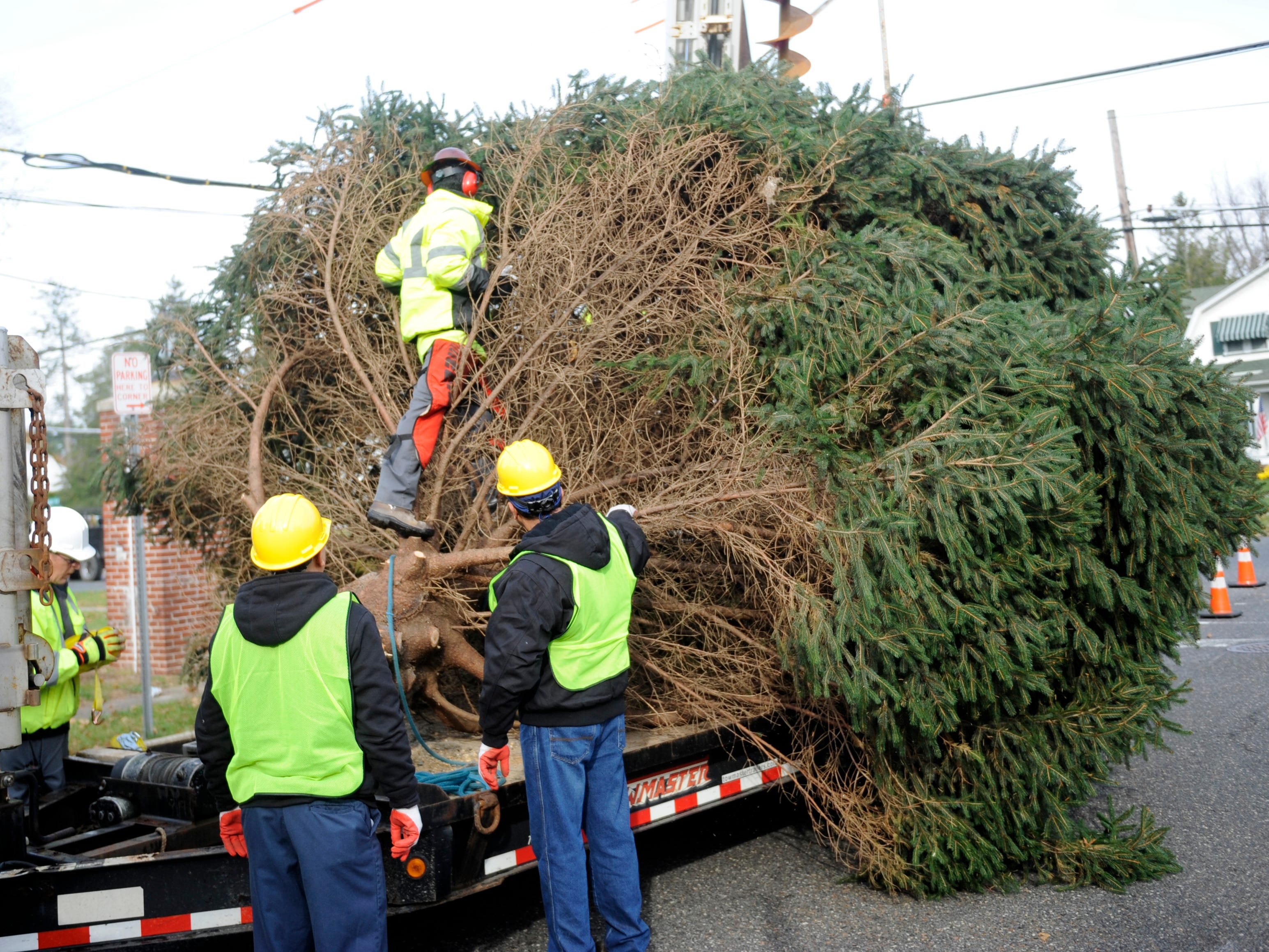 Vineland public works employees secure a donated Christmas tree to a trailer before transporting it to city hall on Monday, November 19, 2018.