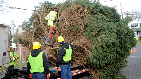 - Christmas Tree Farms: Where Can I Buy A Real Tree In South Jersey?