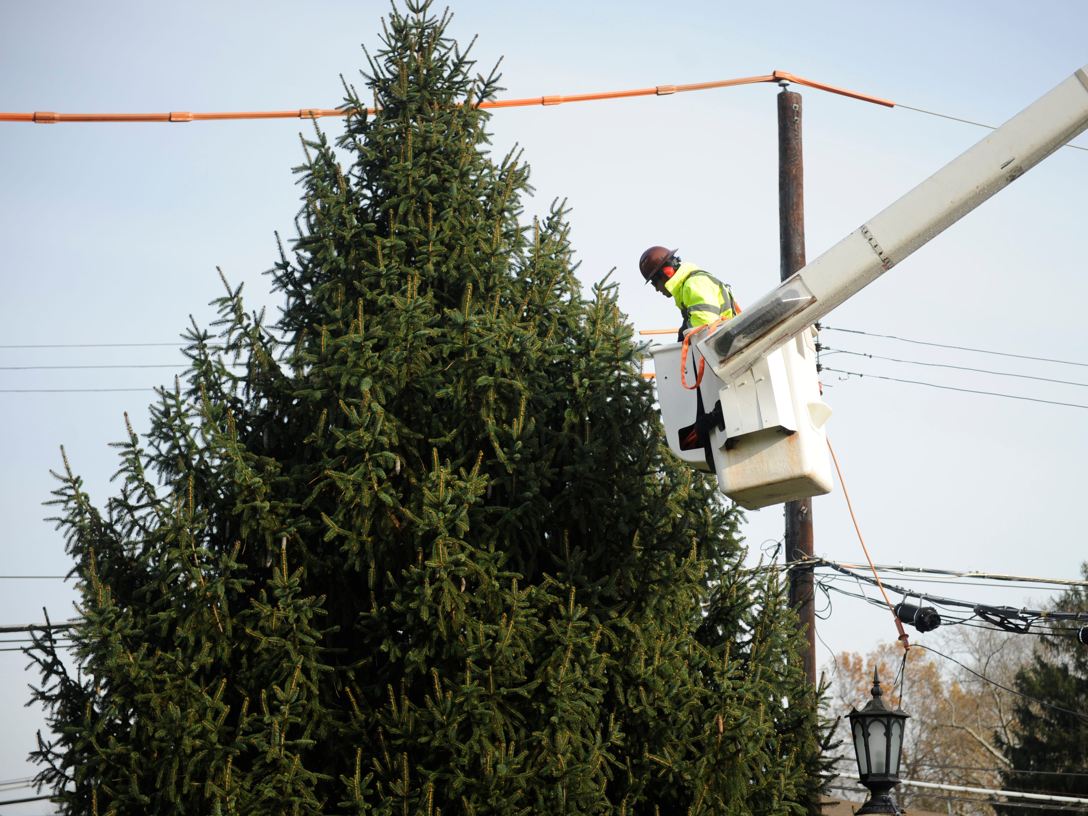 Vineland public works employee David Rodriguez secures a rope to a donated Christmas tree that the department harvested for city hall on Monday, November 19, 2018.