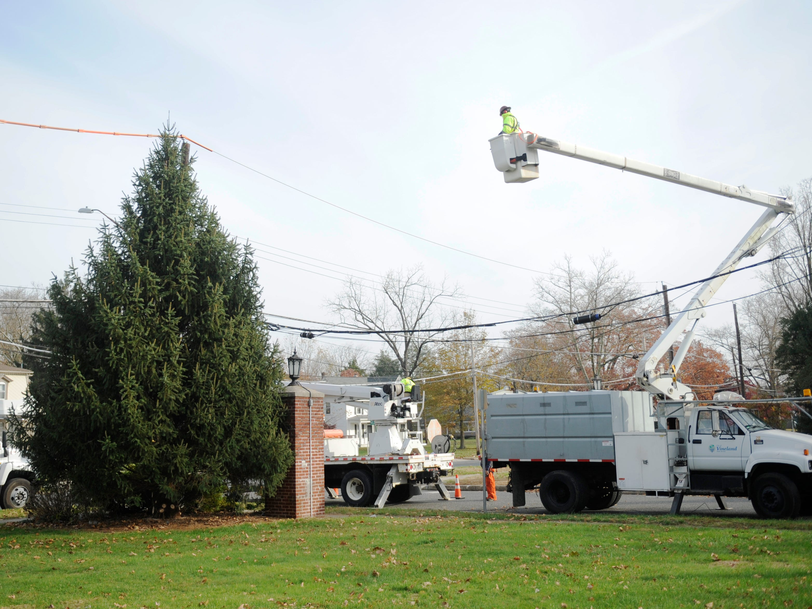 Vineland public works employees cut down a donated Christmas tree that is on display in front of city hall on Monday, November 19, 2018.