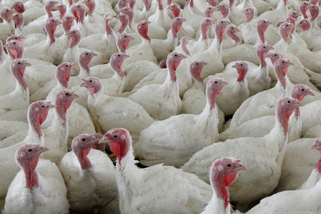 This is the first confirmed case of a highly pathogenic avian flu in a U.S. commercial poultry flock in three years.