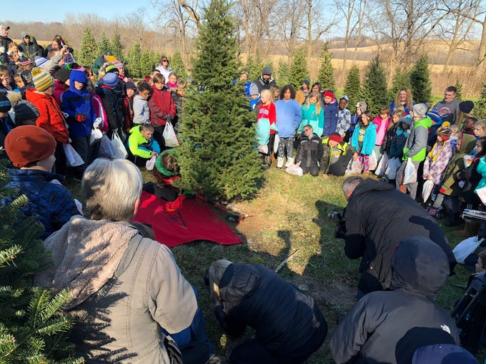 Alice in Dairyland, Kaitlyn Riley, cuts down a tree at Lancaster's Winterberry Tree Farm in Brooklyn on Nov. 15 to mark the 2018 Christmas tree season.
