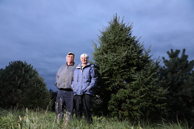 Richard and Marjorie Christensen own the Old Log House Plantation in Somerset. The Christmas tree farm has more than 26,000 Christmas trees, and visitors can pick their own after riding a wagon pulled by a draft horse .
