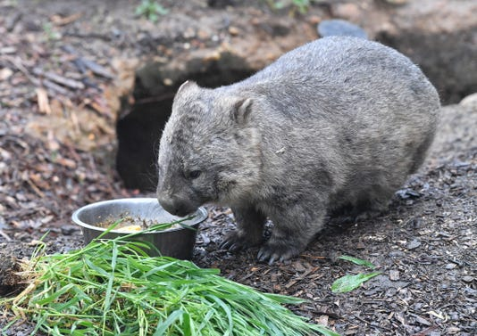 Epa Australia Britain Animals Env Animals Conservation Aus Sa