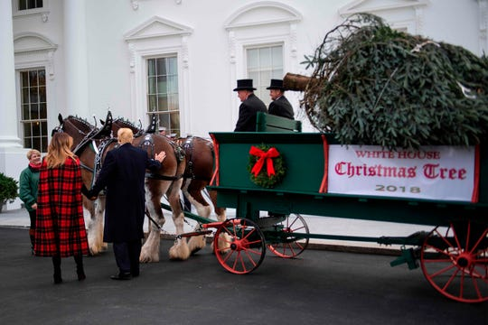 President Trump and first lady Melania Trump inspect the White House Christmas Tree delivered Nov. 19, 2018,   and POTUS pats a horse.