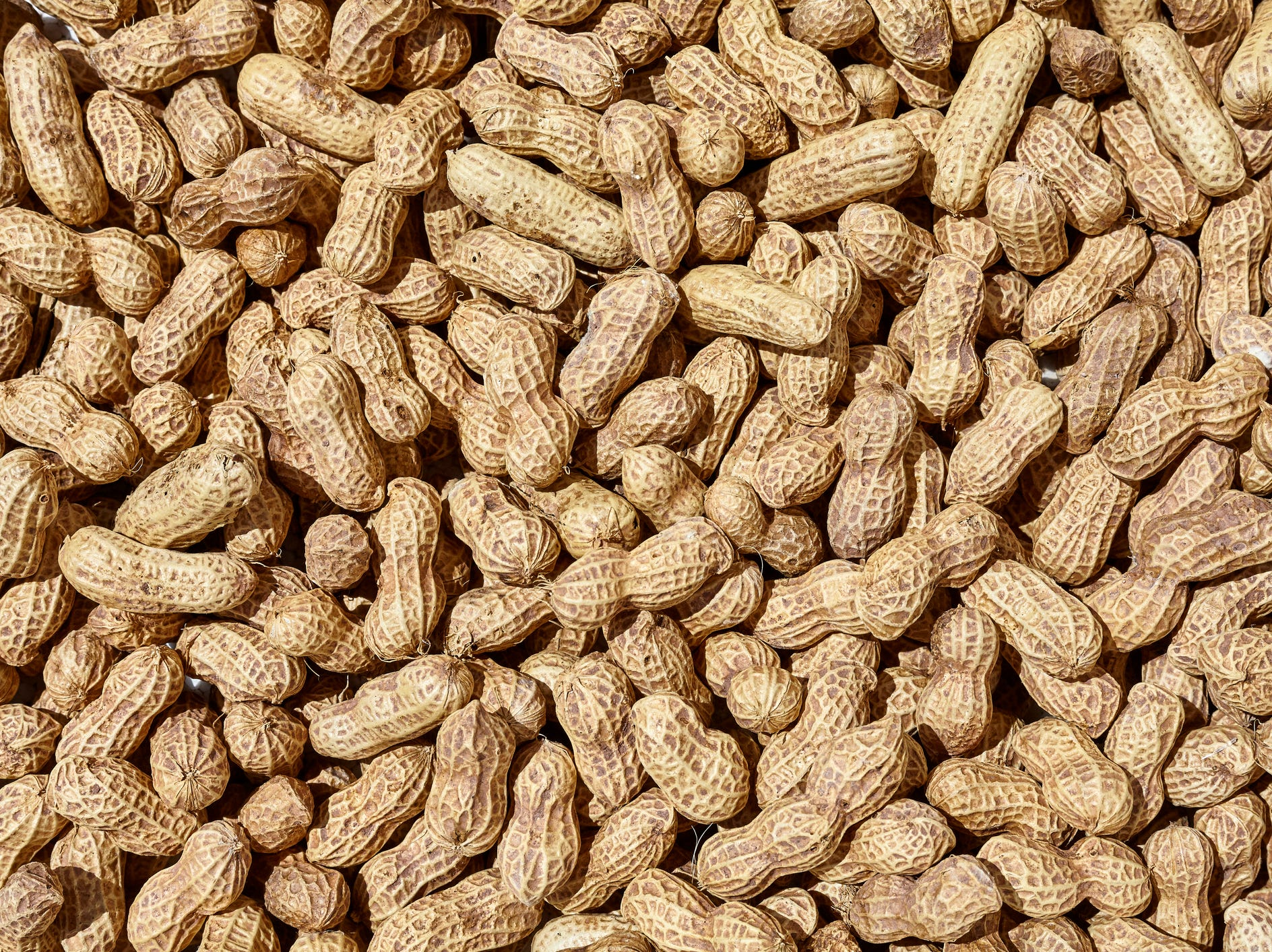 'Breakthrough' peanut allergy drug ready for FDA review offers hope for those who suffer