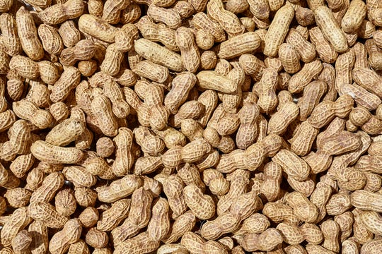 Peanut allergies can be deadly. This treatment might do more harm than good, study says