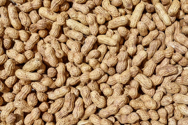 A new experimental drug isn't promising to be a cure for peanut allergies, but it might prevent deadly reactions in those with severe allergies.