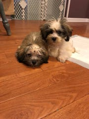 Sheldon and Missy cozy up to their foster home.