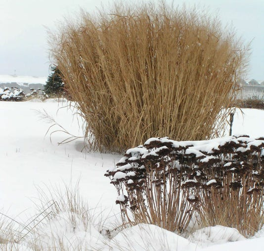 Cgo Perennials In Winter