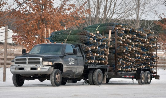 Harvested Christmas trees are moved for shipping at the Dutchman Tree Farms near Manton, Mi. Tuesday, Nov. 20, 2018.