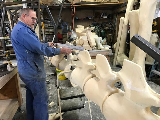 Paleontologist Dave Trexler of Two Medicine Dinosaur Center in Bynum measures a tail vertebrae that's part of a growing foam dinosaur skeleton.