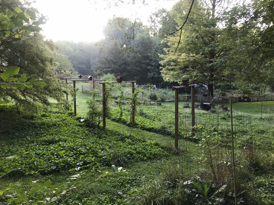 The Carmel, Ind., property of Adam and Emmanuelle Schwarz, still lush in September 2018. The couple use a practice called permaculture to cultivate plants and raise livestock sustainably.