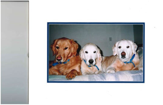 Rocky, Cheerio and Tyler, three of Albert Holtz's four golden retrievers, all of whom are buried at Heavenly Acres pet cemetery in Genoa Township, Mich. The future of the burial ground is uncertain after the cemetery operator's lease expired.