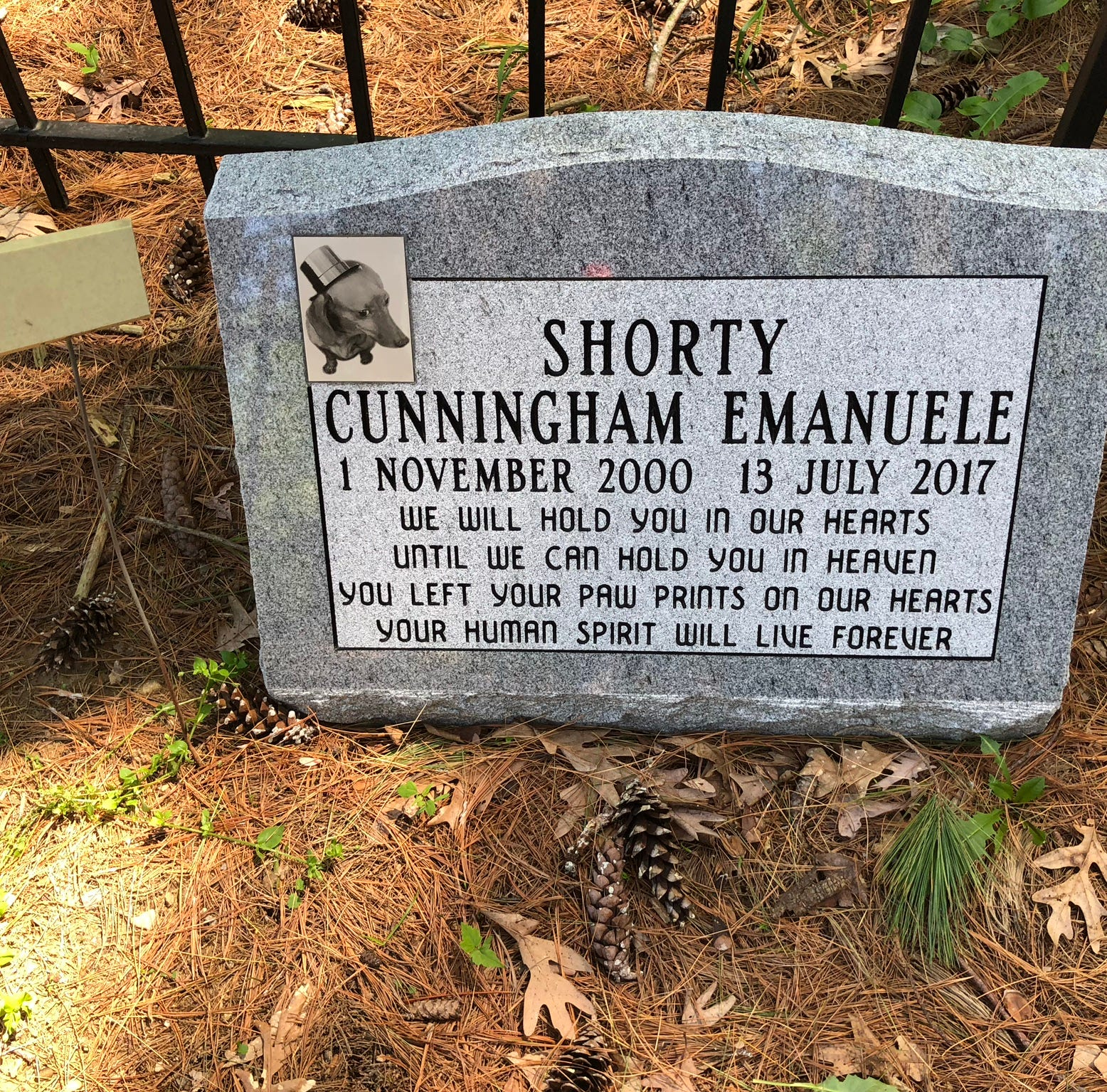 Shorty, a dachshund, was buried in Heavenly Acres pet cemetery in Genoa Township last year, but the cemetery's future is uncertain after the lease expired.