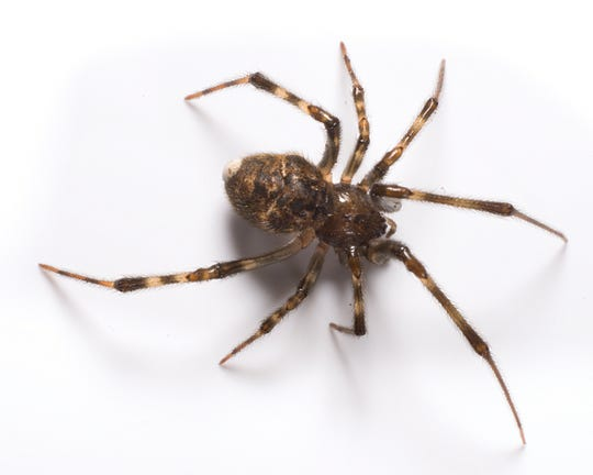 Spiders catch and eat some harmful insects such as roaches, earwigs, mosquitoes, flies and moths.