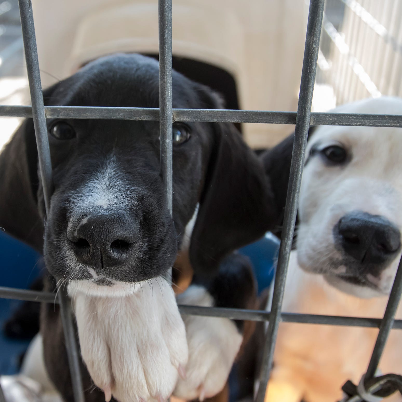 Community rallies to stock Ouachita Parish Animal Shelter's empty cupboard
