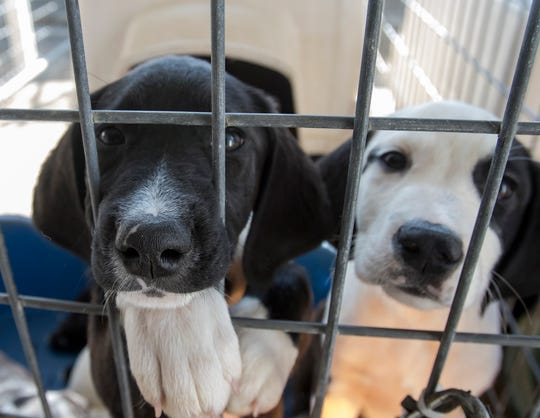 puppies paw at their kennel at the Ouachita Parish Animal Shelter in West Monroe, La. on Nov. 20. Dogs and cats are available for adoption through the shelter for a nominal fee.