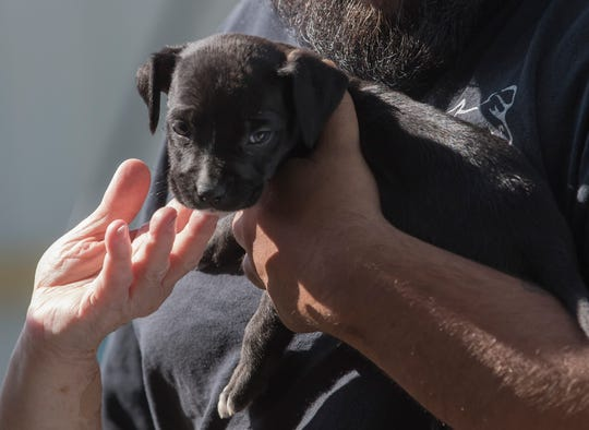 A puppy is being dropped off at the Ouachita Parish Animal Shelter in West Monroe, La. on Nov. 20. Dogs and cats are available for adoption through the shelter for a nominal fee.