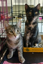Visit the Randolph Animal Shelter on Saturday and meet kittens of all colors and personalities looking for their forever homes. All adoptions are free during the event. Tamminy and Tinker, left, will be waiting to make new friends.