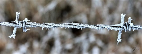 The hoarfrost appears as barbed as the wire.