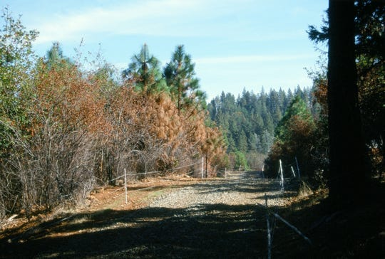 These ribbon hot wires were used in the Sierra to contain large areas for temporary grazing to remove the brush and saplings, but leave the big trees.