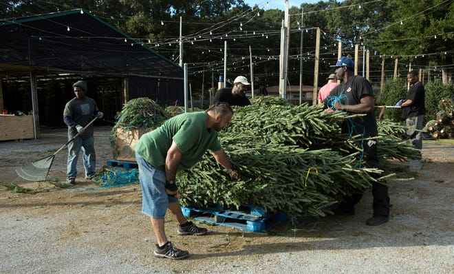 While finding just the right Christmas tree may seem like the hard part, getting it home safely is where the real challenge begins.
