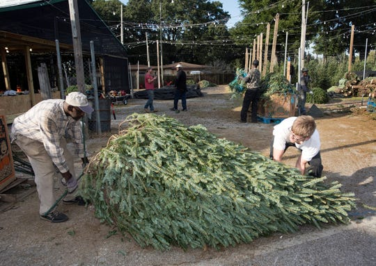 Wiley Tremble and Devin Brown join other Bailey's Market employees in stocking up on a selection of Christmas Trees from North Carolina on  Monday, Nov. 19, 2018.