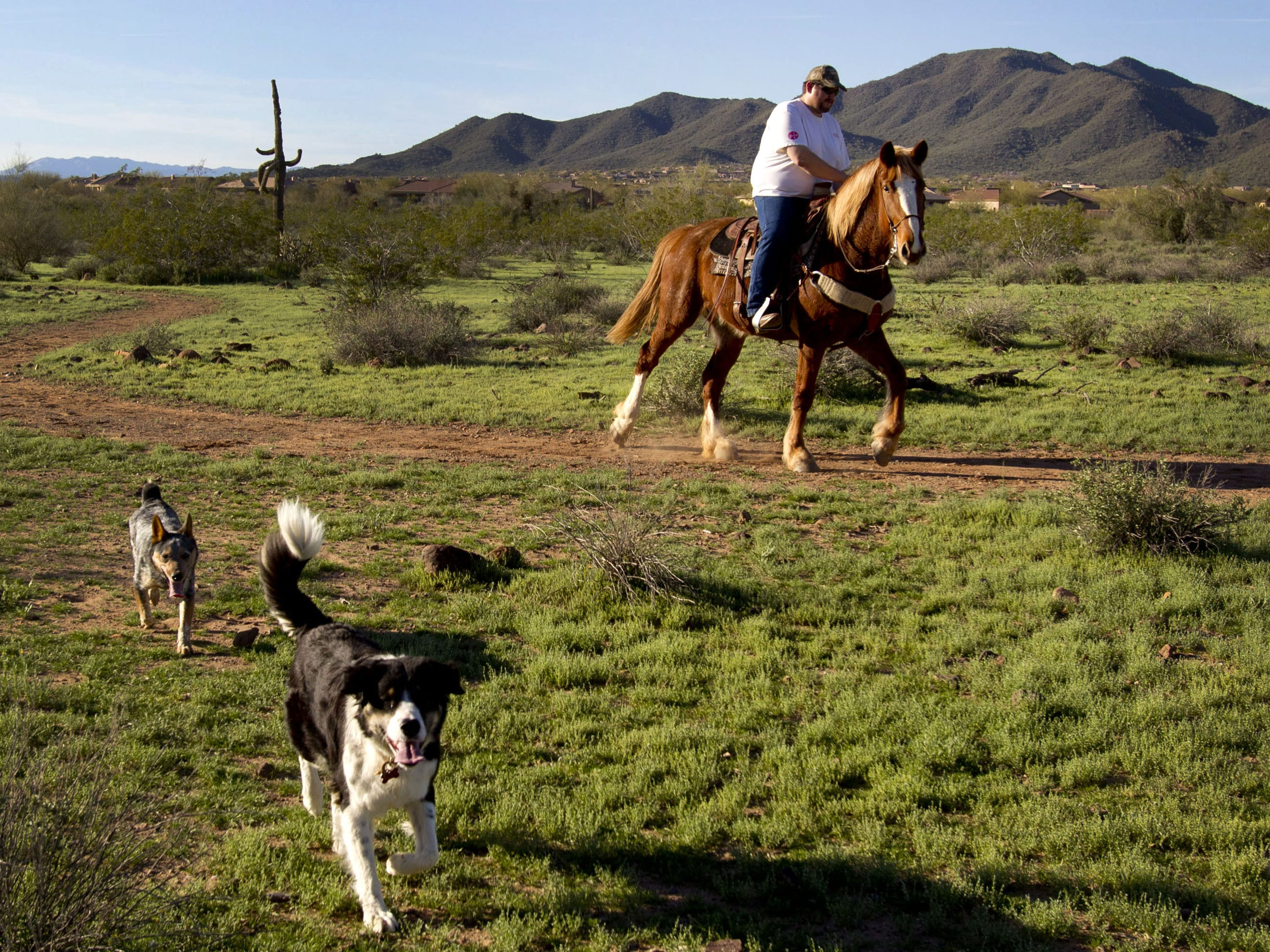 James Gillespie rides Shine on the Maricopa Trail with his dogs Jango (back left) and Roxy near the Anthem trailhead in 2013.