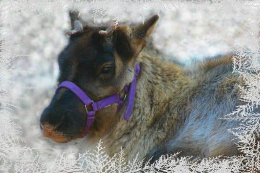 Phoeniz Zoo Baby Reindeer Girl