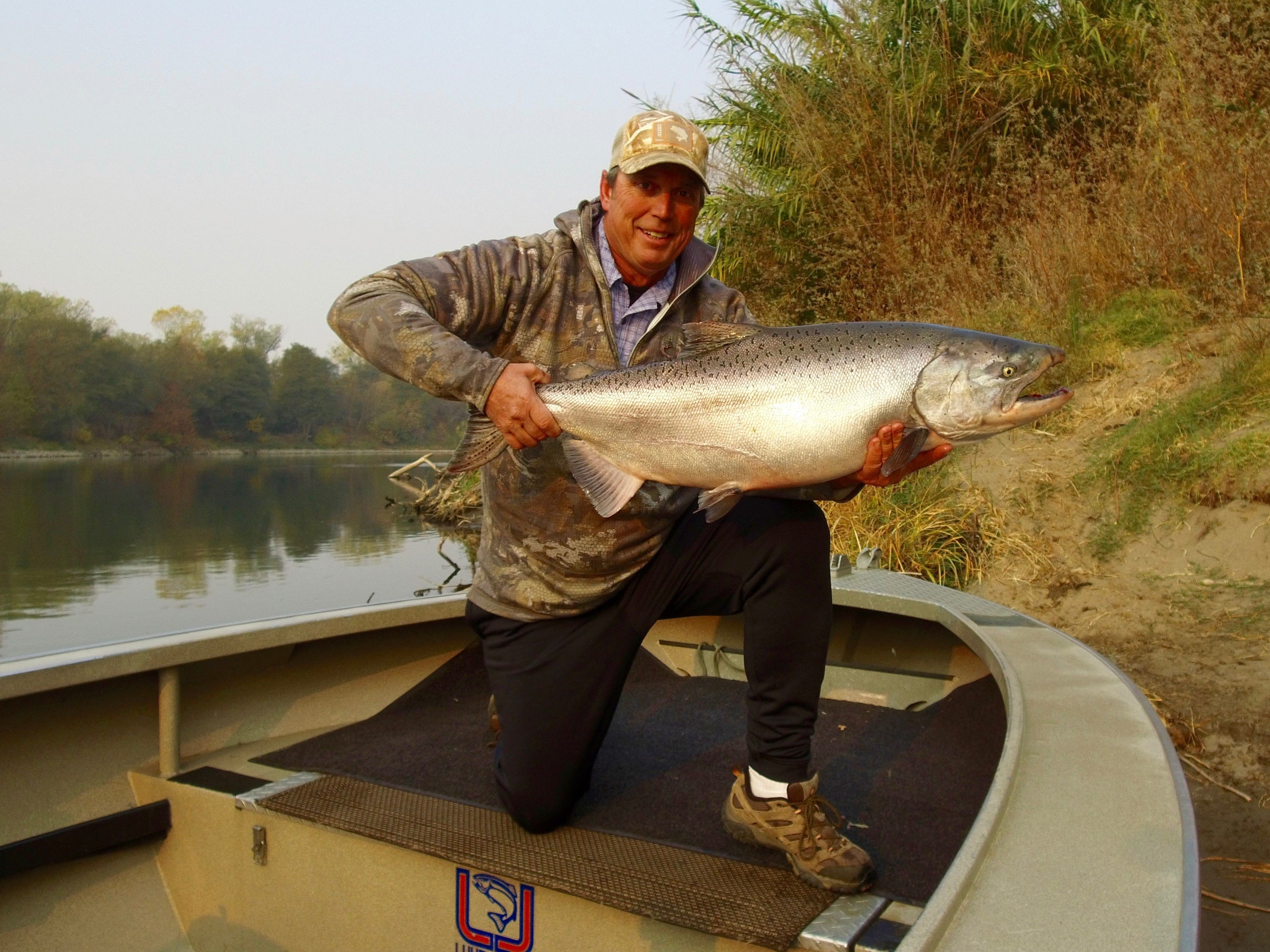 Dave Jacobs of Professional Guide Service in Redding holds a large, chrome bright Sacramento River late fall king salmon.  Jacob's big king grabbed a fresh sardine wrapped K-16 Kwikfish on the Sacramento River this week below Red Bluff. November and December are peak months to target large, hard fighting late fall king salmon on the Sacramento River.