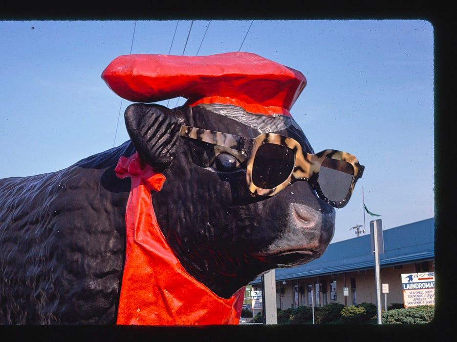 Watch: Capt. Bob's Bull: Delmarva's fiberglass statue gets new home in Sussex