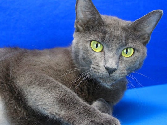 Solara is one of the cats recently adopted at the animal shelter.