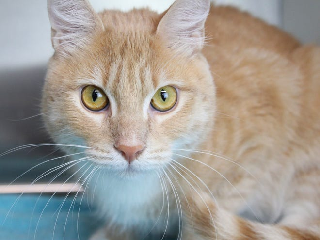 Dusty is one of the shelter cats recently adopted.