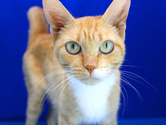 Roxanne is one of the cats recently adopted at the animal shelter.